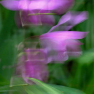 Slow shutter subject or camera movement #1