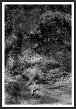 Plane Tree #1, Mt. Ida (2012)