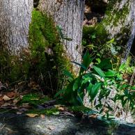 Stepstone Falls #08