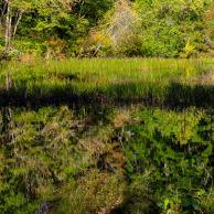 Arcadia State Park #04