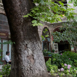 Plane tree in the courtyard of Koza Han