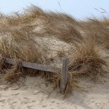Dunes of Cape Cod (Jan Ekin)
