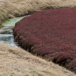 Cranberry Bog (Jan Ekin)