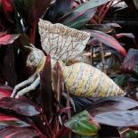 Amphitrite Detail, Bumble Bee, A. C. Ekin