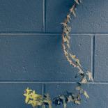 Ivy in the Hallway, A. C. Ekin