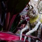 Amphitrite Detail, Bumble Bee, Jan Ekin