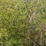 The days after the virus are clearly visible behind the thicket