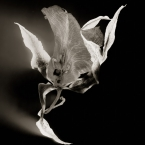 Dance of the Orchids # 7