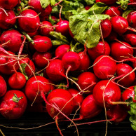 Radish very reddish