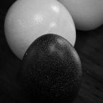 Three eggs monochrome