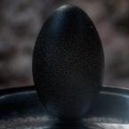 Monolith egg