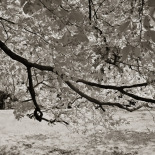 IR reveals the translucent nature of leaves