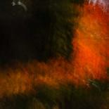 Fall Colors #29
