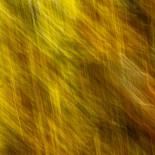 Fall Colors #02