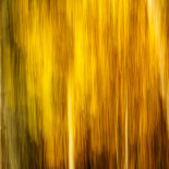Fall Colors #04