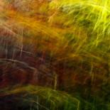 Fall Colors #16