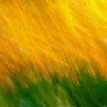 Fall Colors #05