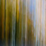 Fall Colors #24