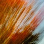 Fall Colors #26