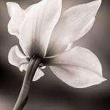 Orchid Gazing