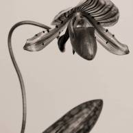 Orchid on a Twisting Stem
