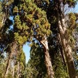 Cypress trees of Karacaahmet Cemetery