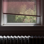 Window blinds color matches the rose of Sharon flowers