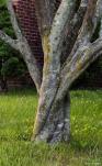 Dancing tree trunks