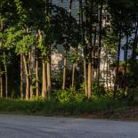 Neighborhood - Trees and the last rays of sun