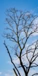 Neighborhood - Dead tree