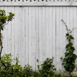 White(ish) Fence