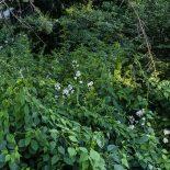 The jungle next door #2