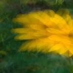 Slow shutter, stroboscopic image #3