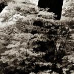Neighborhood trees in infrared