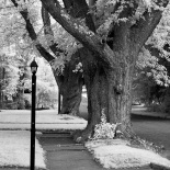 Osceola Street