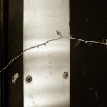 New buds on the black metal door