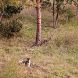 Cats in the field