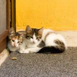 Cats in a corner
