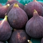 Fresh figs at the Kuzguncuk Market