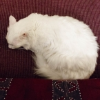 Gunduz resting
