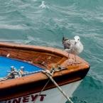 Kuzguncuk, boats and gulls