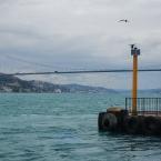 Kuzguncuk, anhinga and the view of the bridge - Photo by Jan