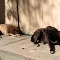 Well-mannered dogs of Kuzguncuk