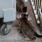Feast for street cats