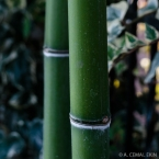 Well-contained bamboo