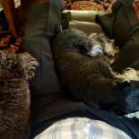 Josephine and Karma resting with me