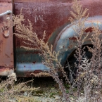 Rust and Weeds