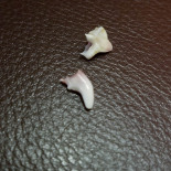 Karma's teeth, he dropped them in places we could find