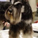 Karma on his grooming table