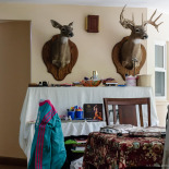A pair of taxidermied deer heads